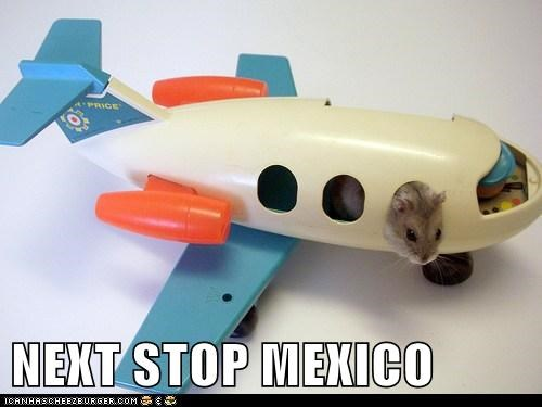 mexico hamster airplane pilot flying fleeing Travel lolz categoryvoting-page lolcats - 6594582272