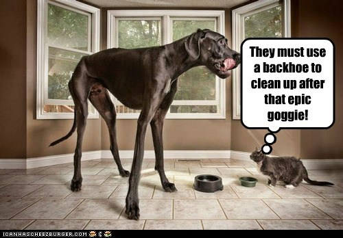 dogs,great dane,Zeus,backhoe,poop,cat,big dog