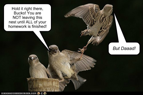 birds nest dad hold it homework parents kids but - 6594843392