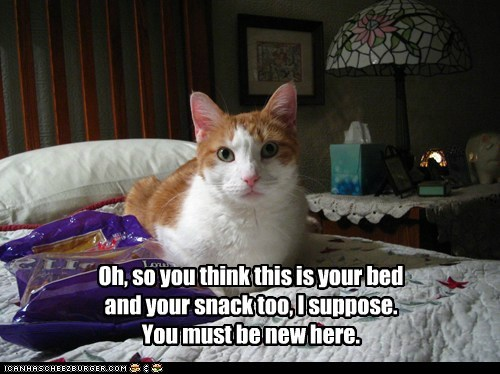 bed captions categoryimage Cats mine new snack stay away - 6594856960