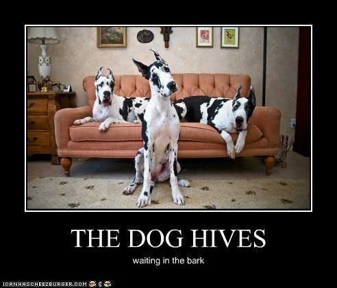 THE DOG HIVES waiting in the bark