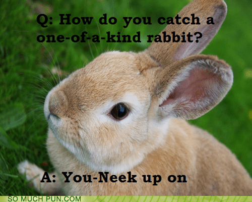 answer,one of a kind,question,rabbit,similar sounding,sneak,unique