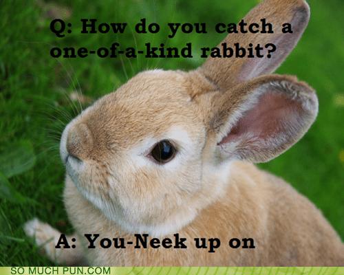 answer one of a kind question rabbit similar sounding sneak unique - 6595090176