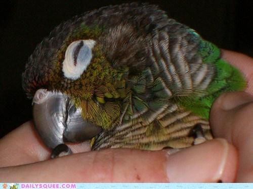 beak bird nap parrot pet reader squee sleeping - 6595453696