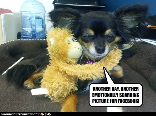 dogs,chihuahua,monkey,stuffed animal,facebook,embarrassing
