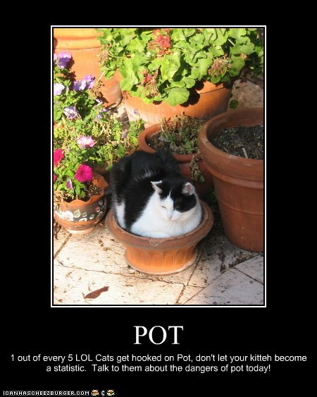 POT 1 out of every 5 LOL Cats get hooked on Pot, don't let your kitteh become a statistic. Talk to them about the dangers of pot today!
