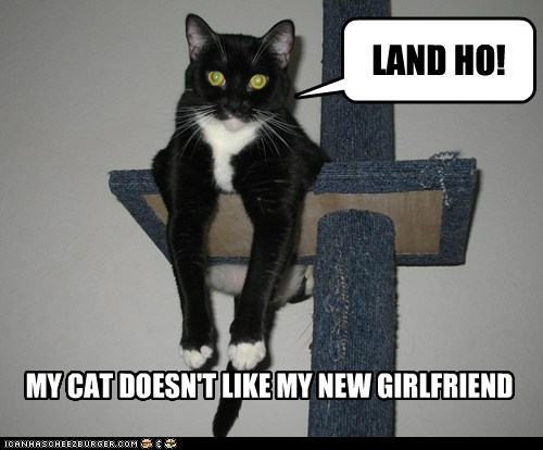 captions categoryimage Cats fat girlfriend land ho Pirate