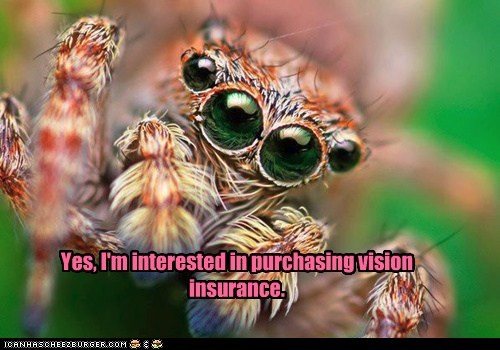 spider insurance interested eyes glasses