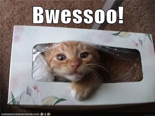 box,captions,Cats,gesundheit,god bless you,kleenex,sneeze,tissues