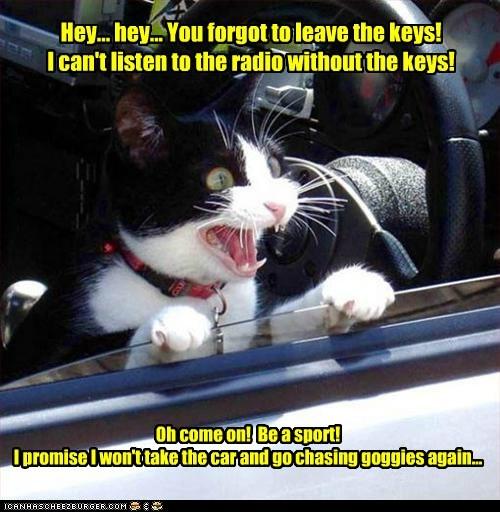 captions car Cats keys listen parking lot radio - 6595949312