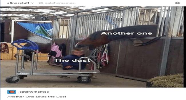 tumblr posts horses funny jo38ma3 - 6596101