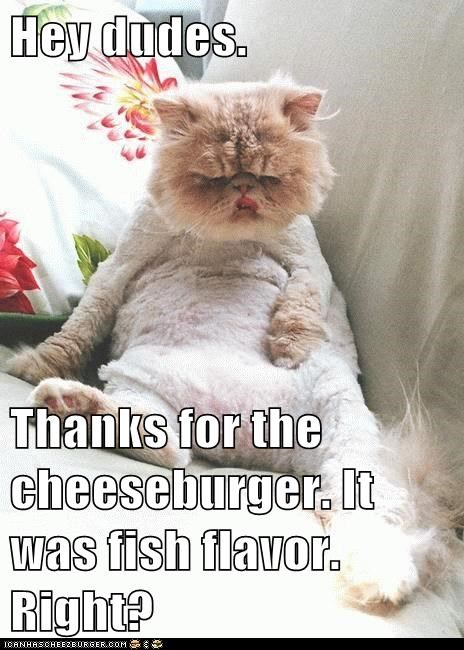 Cheezburger Image 6596128256