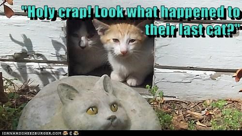 """Holy crap! Look what happened to their last cat?"""
