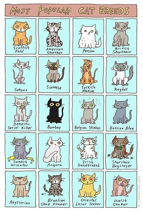 breeds,cat breeds,Cats,charts,comics,illustrations,infographics,jim benton,silly