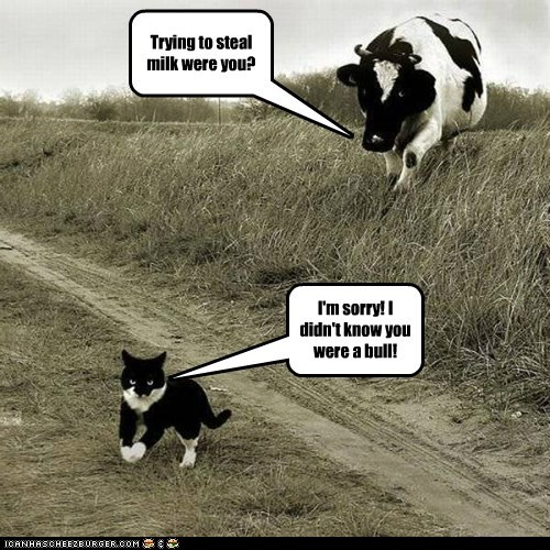 cow,bull,cat,chasing,milk,stealing,male