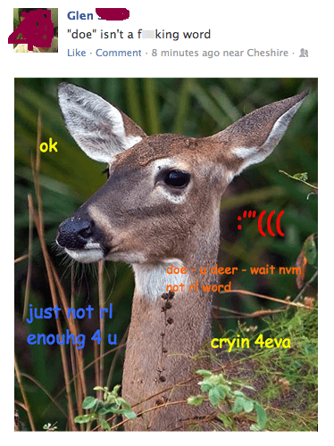 comic sans deer doe glen shiba shiba confessions shibe