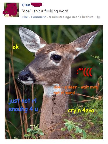 comic sans deer doe glen shiba shiba confessions shibe - 6596464128