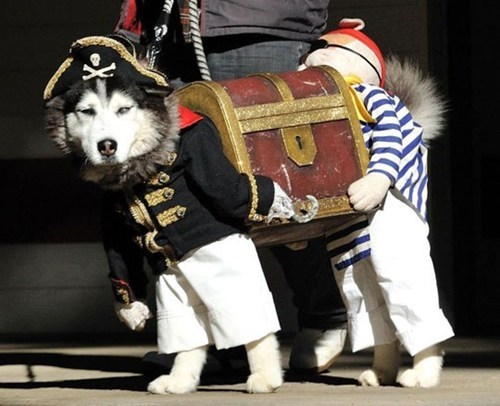 booty costume dogs husky Pirate talk like a pirate day - 6596547072
