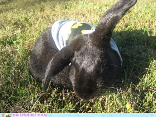 reader squee pet squee bunny rabbit batman sweatshirt happy bunday - 6596652800
