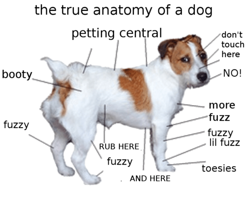 True Dog Anatomy