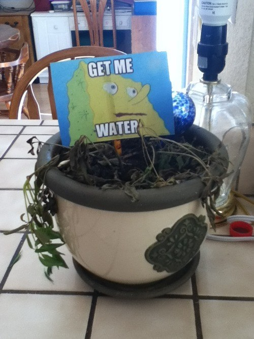 plant,SpongeBob SquarePants,water