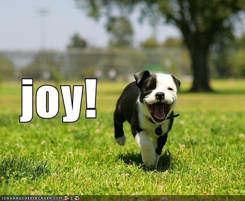 happy Joy sunshine whatbreed - 659685120