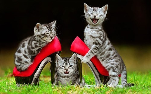 Cats,cyoot kitteh of teh day,fashion,grass,high heels,kitten,shoes