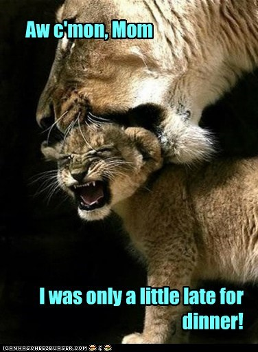 mom lion cub parents kids late dinner picking up - 6597100800