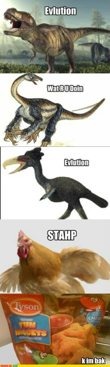 chicken,chicken nuggets,dinosaurs,evolution,Reframe,staph,wat r u doin