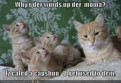 capshuns captions kitten lolcats lolkittehs orange self aware - 659737344