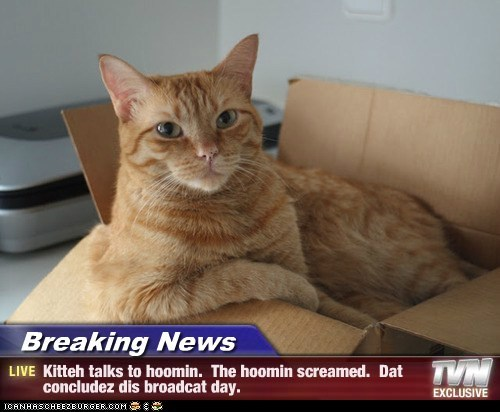 Breaking News - Kitteh talks to hoomin.  The hoomin screamed.  Dat concludez dis broadcat day.
