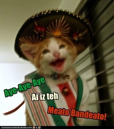 Aye-Aye-Aye Ai iz teh Meato Bandeato!