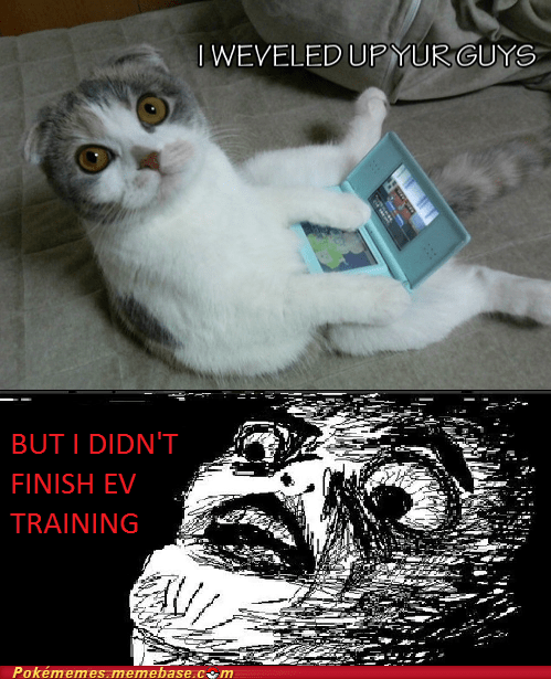 Cats EV training Pokémon stahp - 6597560064