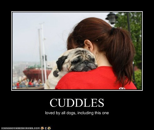 CUDDLES loved by all dogs, including this one