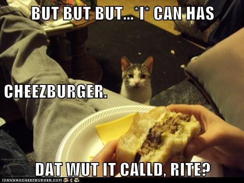 Cheezburger Image 6597713664