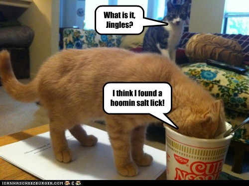 salt lick sodium salt ramen noodles nom cup of noodles Cats captions - 6598243072