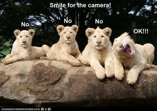 lion,captions,smile,camera,Awkward