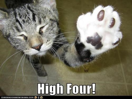 high five,four,high four,Cats,captions
