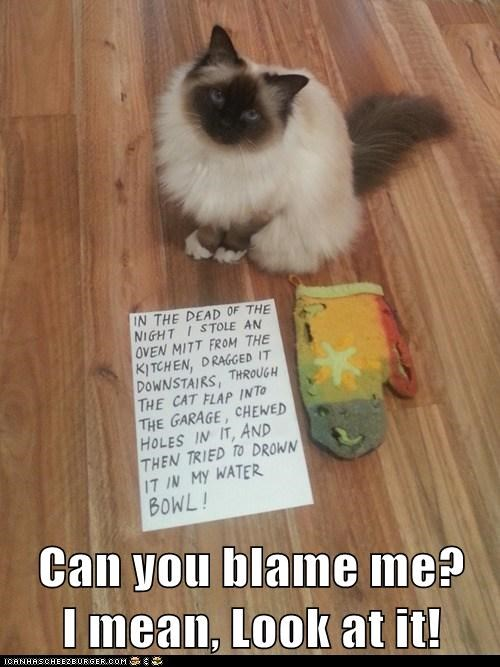 blame cat shaming shame mitt gross ugly Cats captions - 6598355200