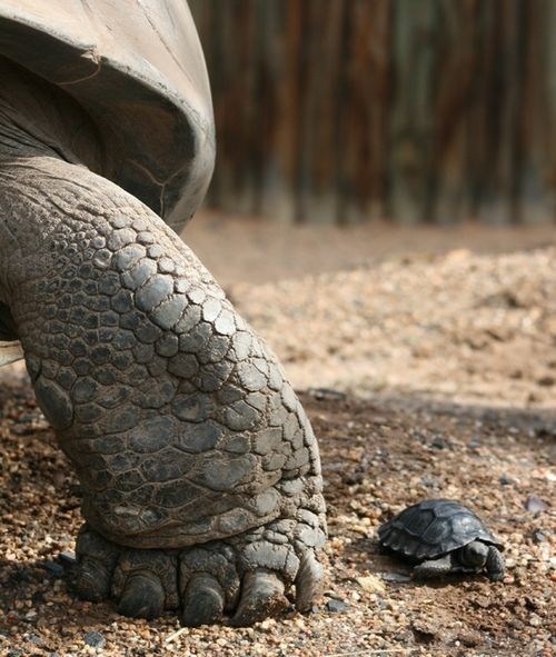 baby big foot mommy shell squee squee spree tortoise - 6598596352