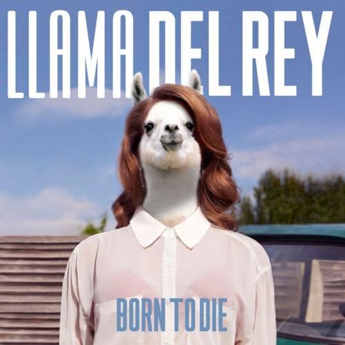 born to die lana del rey llama - 6598787840