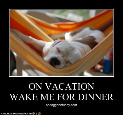 ON VACATION WAKE ME FOR DINNER sodoggonefunny.com