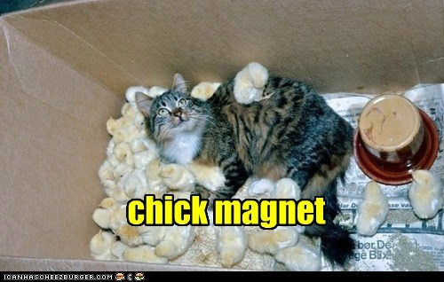 Cheezburger Image 6599268608