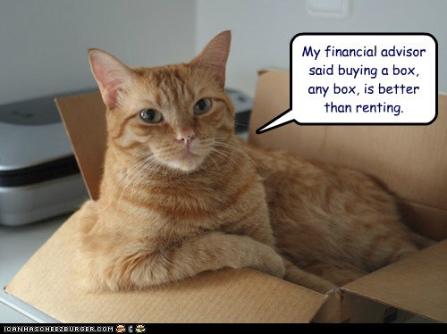 box buy captions Cats finances financial advisor house rent
