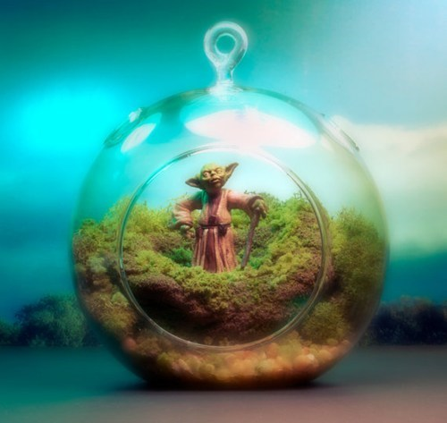 moss,Movie,sci fi,star wars,terrarium,yoda