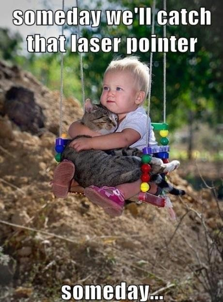 baby,cat,laser pointer