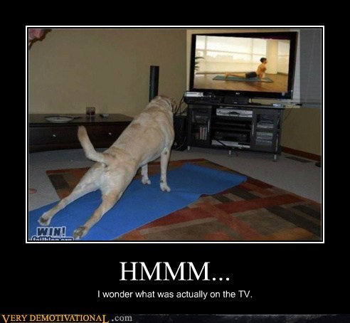 dogs,I wonder,on tv,yoga