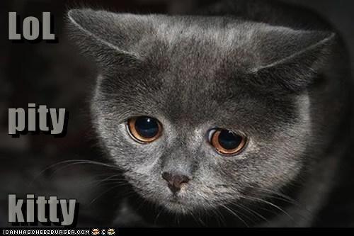 LoL pity kitty