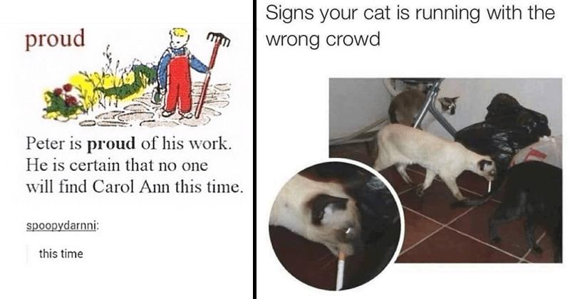 Funny random memes, cat memes, funny memes.