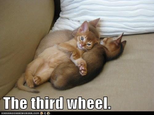 Awkward captions Cats love relationship third wheel
